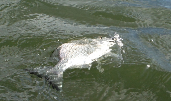 The bream often come out after rain