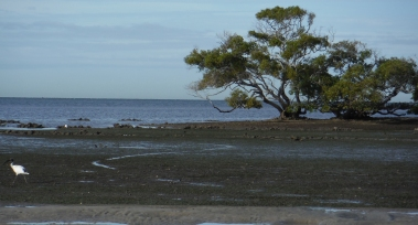 Low tide on the flats