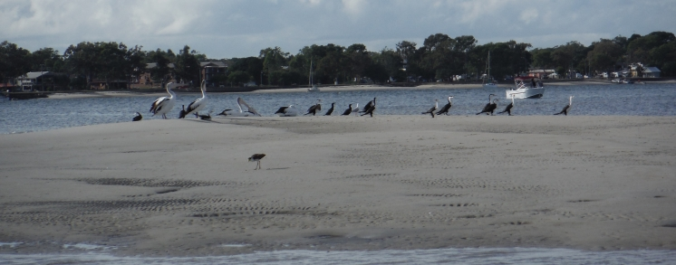 Low tide sand bank