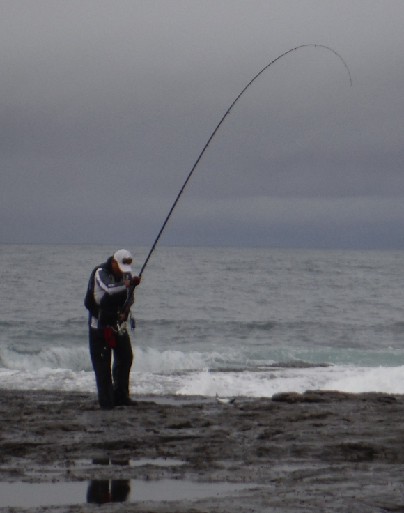 A keen angler lands a small trevally - Iluka Bluff