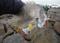 Crazylegs Bream