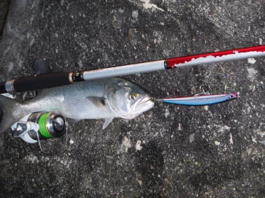 Battered Daiwa Demonblood
