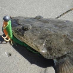 This one grabbed a GULP Mantis Shrimp