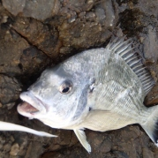 Another bream