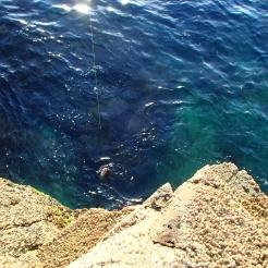 FIsh at the base of the rocks