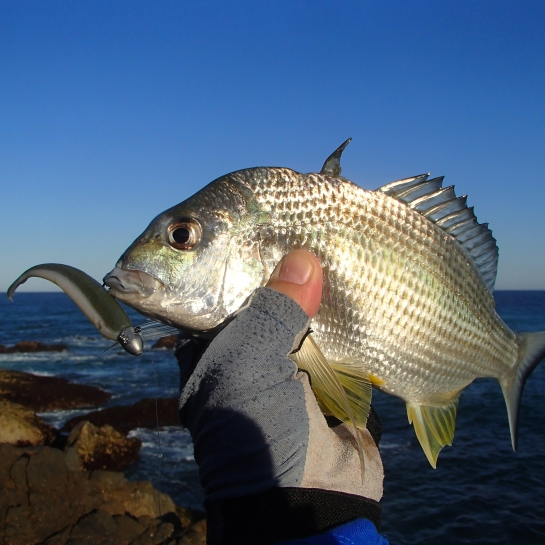 Bitten bream