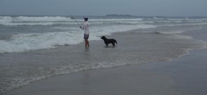 Black labradors - fishing dogs