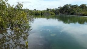 Crystal clear water - Marshalls Creek