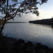 Fishing at Boggy Creek - Brisbane RIver