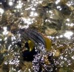 Handsoem fish