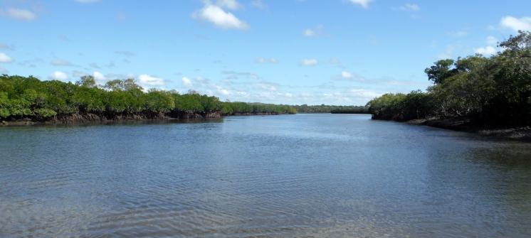 Toms Creek