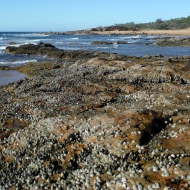 Wreck Rock at Low tide