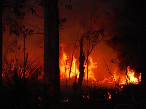 Controlled burn - Deepwater National Park