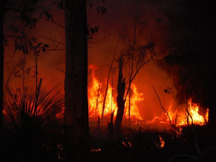 Controlled burn - Deepwater National Park