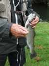 my-father-with-a-typical-sized-rainbow-trout-on-a-nymph