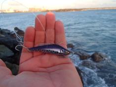 Mackay mackerel liked these