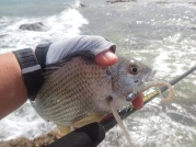 Bream from the wash