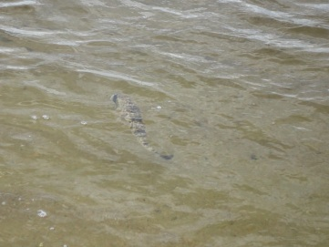 The Richmond River - OCT 2018 (1)