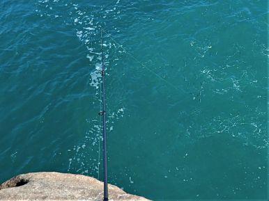No shortage of herring