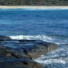 Dolphins at Middle Bluff