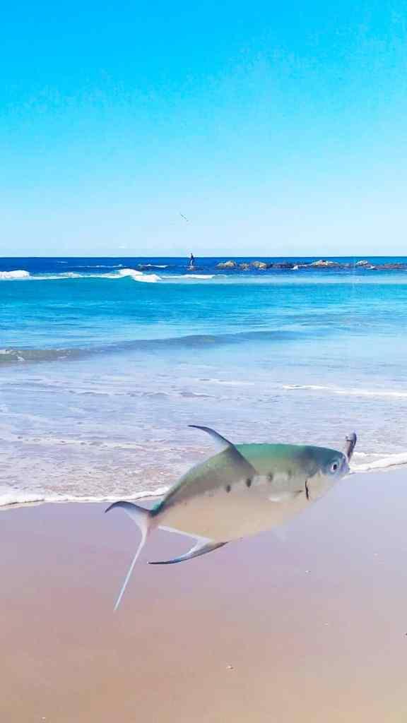 dart fishing